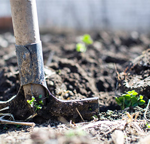 Help Your Spring Garden Bloom Better with these 5 Gardening Tips