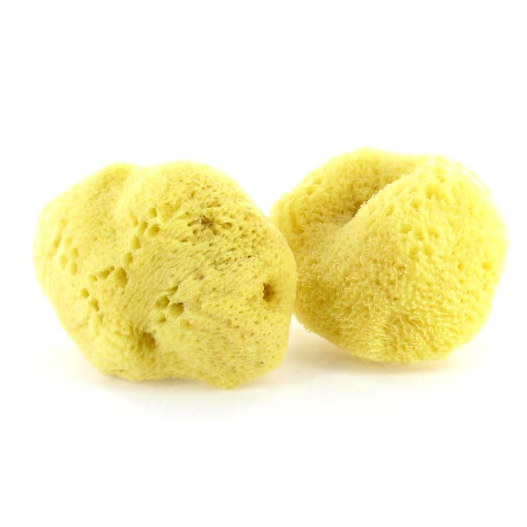 Natural Sea Sponge Tampons Are Great For Your Body & The Environment