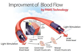 Woman Stress-Free Improvement Of Blood Flow By PAMS Techonology