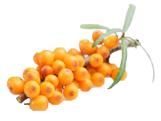 Star Ingredient Sea Buckthorn