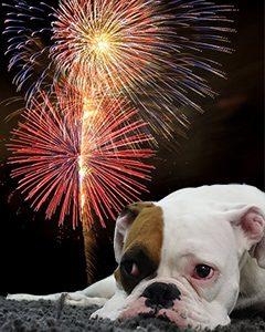 dog on fireworks night