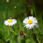 Seasonal Allergies- How to Combat Them